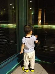 電車に手を降るとらちゃん (2012/8/10)