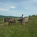 Traditional Hungarian horse and cart (Mr & Mrs McLennan)
