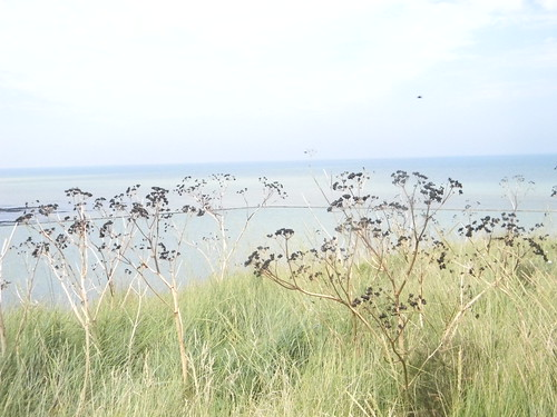 Fennel on the cliff