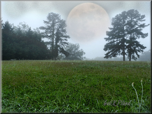 morning trees moon field fog photoshop vividimagination gailpiland