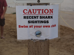 Shark Sightings on Cape Cod