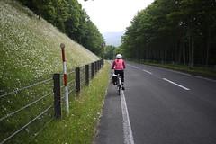 Wild flowers lining the roads on the Shiretoko Highway (Hokkaido, Japan)