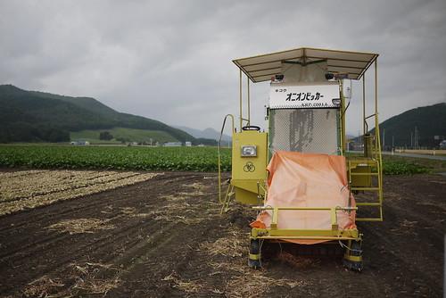 An onion picker near Bihoro (Hokkaido, Japan)
