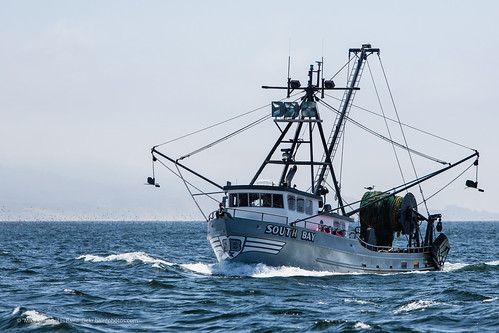 Commercial fishing injuries in alaska alaska fishing for Alaska fishing boats