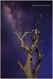 Star Crossed Tree