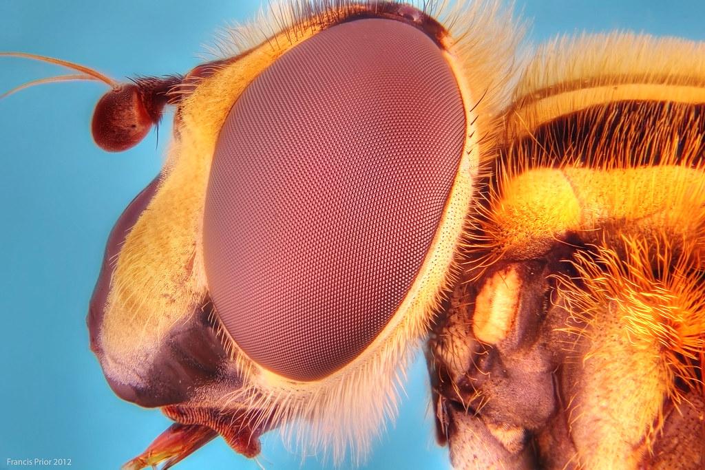 насекомые крупным планом