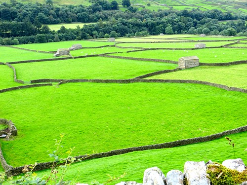 Dry stone walls in the Yorkshire Dales