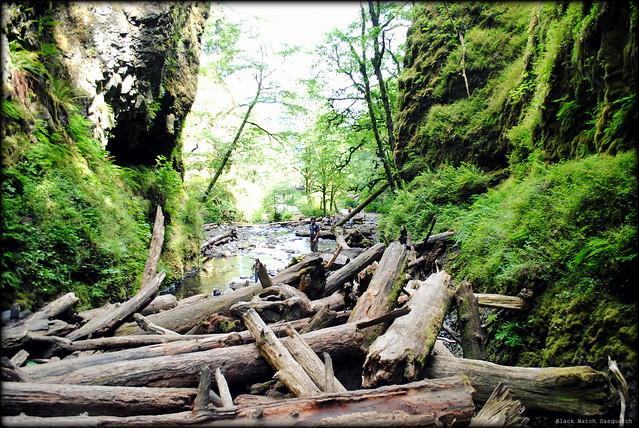 the log jam - Oneonta Gorge