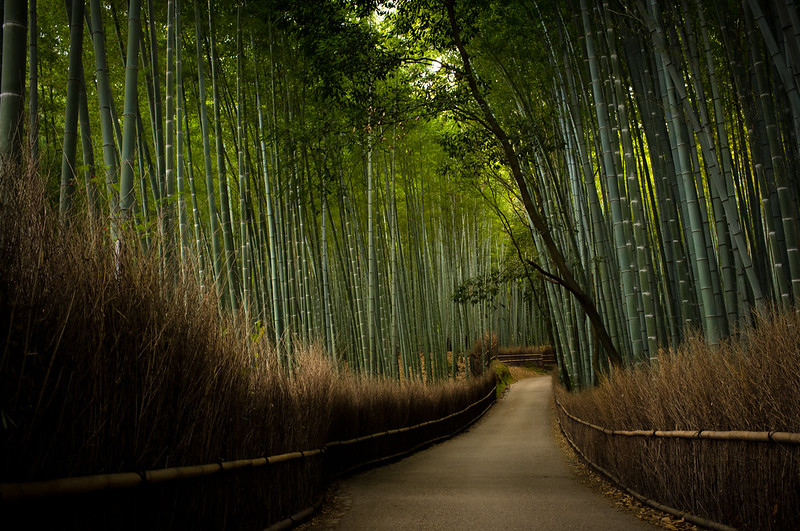 the path of bamboo, revisited #17 (near Tenryuu-ji temple, Kyoto)