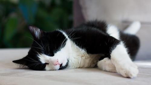 L'heure de la sieste!