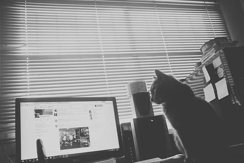 Tengo una compañera editando fotografías #gata #cat #instacat #photo #photography #edicion #compañera