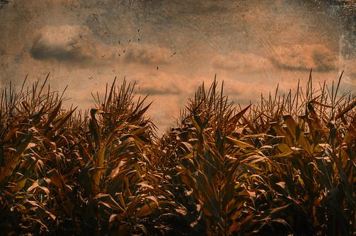 無料写真素材, 自然風景, 田園・農場