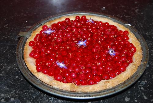 taartje met rode bessen en boragebloemen