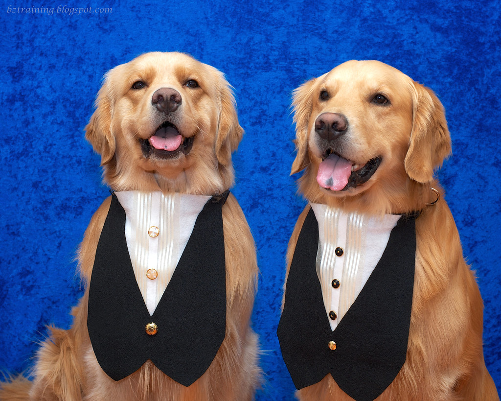 Sharp Dressed Dogs