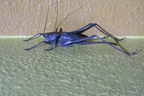 Giant scary bug!
