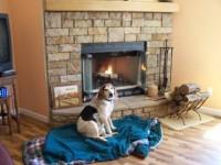 Dolly, dog, fireplace