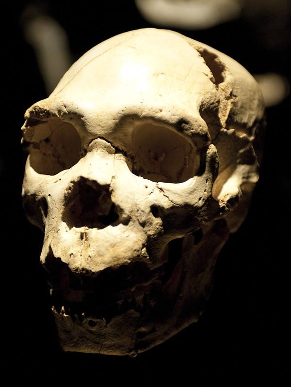 Miguelón - Cráneo del homo heidelbergensis