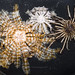 Various Unidentified feather stars (Class Crinoidea)