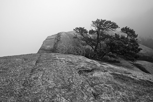 Old Rag Mountain: Bonsai