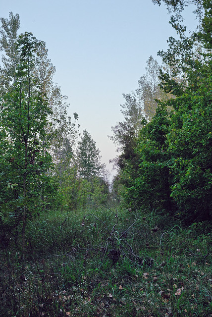 Big Muddy National Fish and Wildlife Refuge, Boone's Crossing Unit, in Chesterfield, Missouri, USA - overgrown forest path