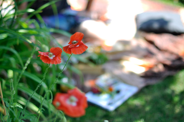 Picnic-and-poppies