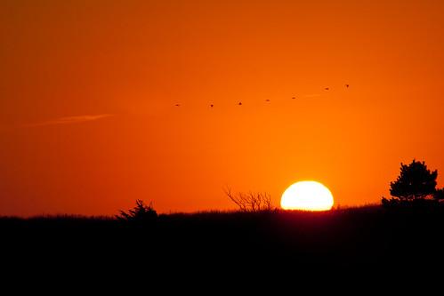 sunset red bird beach washington longbeach breakers