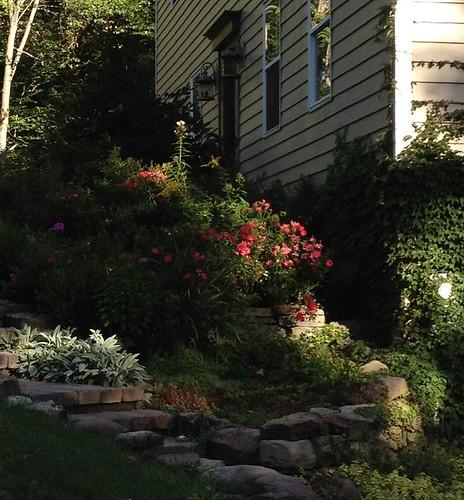Cottage Garden in Morning Light