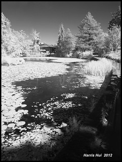 We Love Black & White! - Infrared Van Dusen Garden X1157e