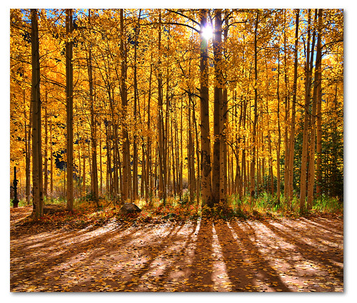 autumn fall sunrise colorado canon20d aspens dirtroad stitched hdr guanellapass simga1020mm vertorama dphdr ptphoto pse8