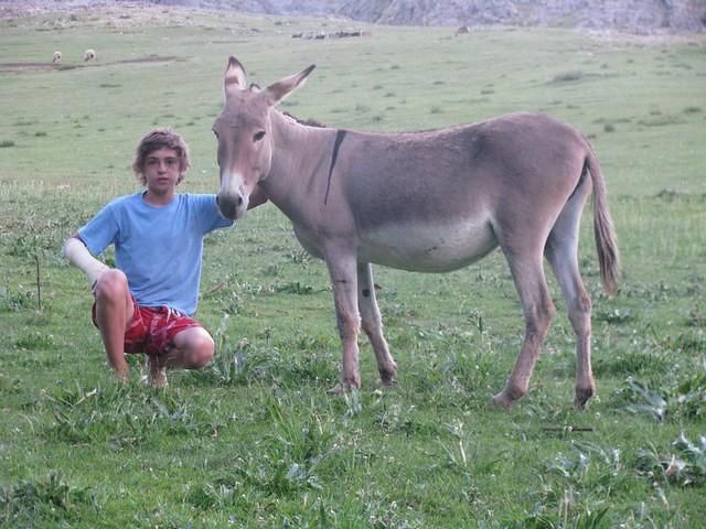 zoofilia con burro