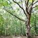 Big White Oak #LordStirlingPark by placenamehere