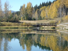 Alberta Fall Reflections