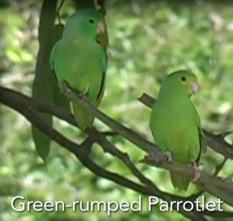 Wild parrots name their babies | video | GrrlScientist | Science