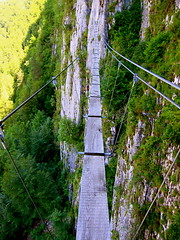 rolling stock(0.0), suspension bridge(1.0), tree(1.0), canopy walkway(1.0), rope bridge(1.0), bridge(1.0),