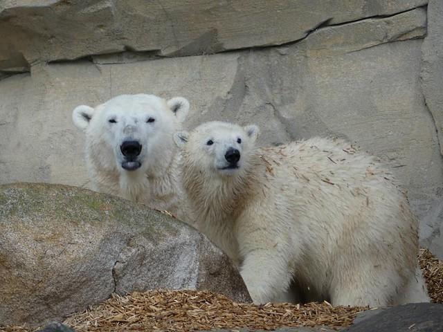 Valeska und Lili, Zoo am Meer