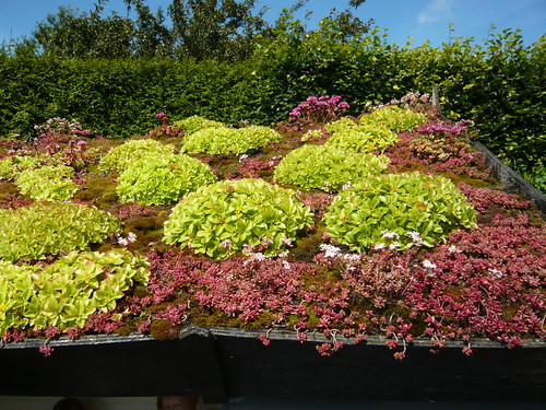 Golden Acre green roof
