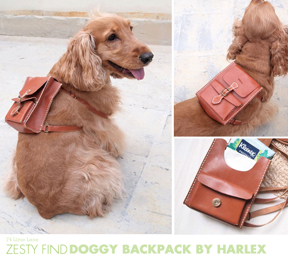 {zesty find} doggy backpack from Harlex