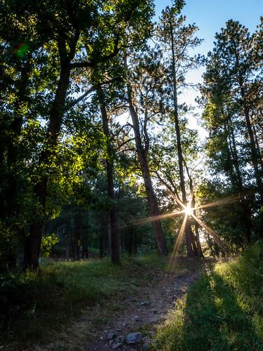 trees sunset plants sun southdakota unitedstates custerstatepark sigma1020mmf456exdc
