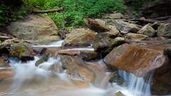 Downstream from Tew's Falls, Hamilton