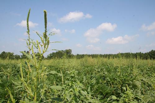 圖片來源:agriculturede