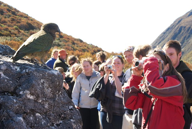 a kea and its audience