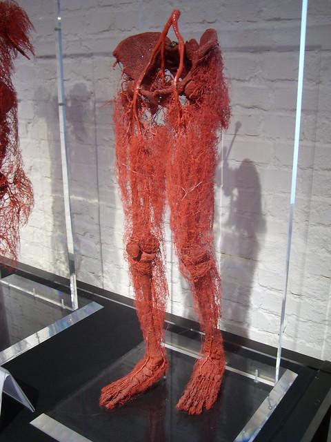krwiobieg