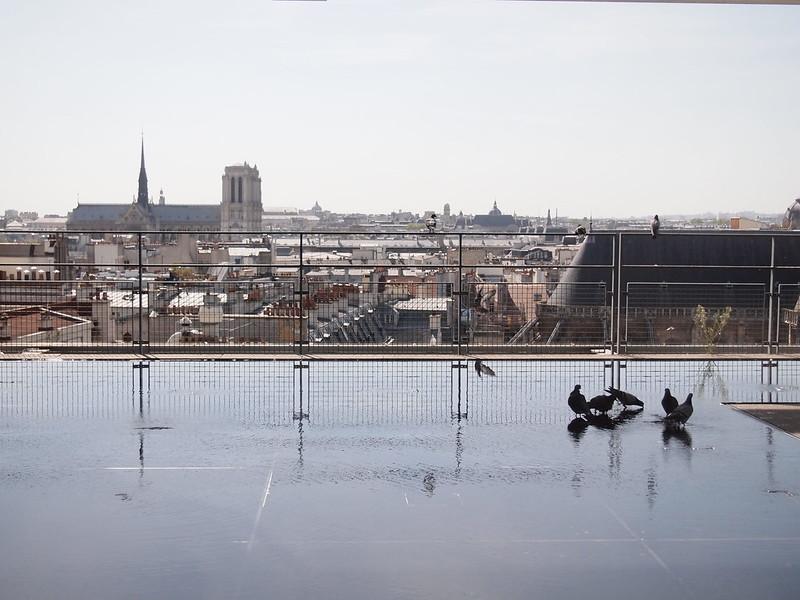 Pompidou Pigeon