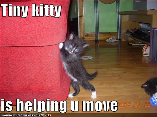 funny-pictures-kitten-helps-you-move