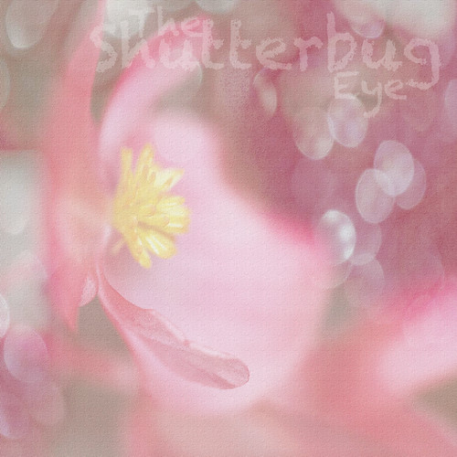 Dream in Pink by The Shutterbug Eye™