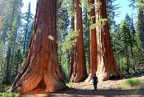 california park travel forest giant nikon grove sierra tokina national backpacking yosemite halfdome redwoods mariposa sequoias 1116 d7000 wanona