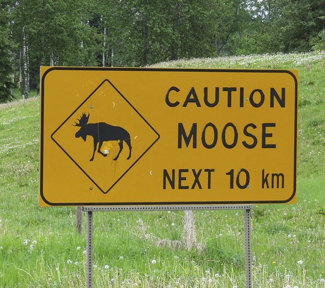 Into the land of the moose