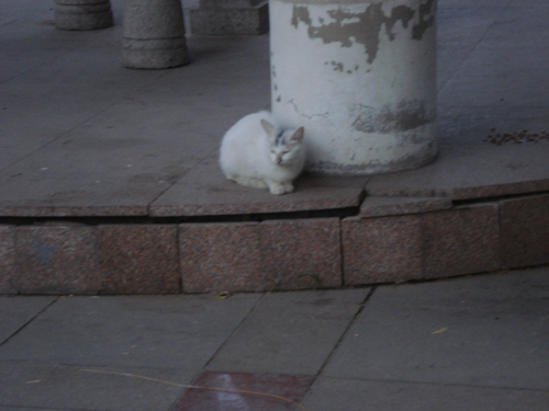 Cats in Shenyang, China _ 0147