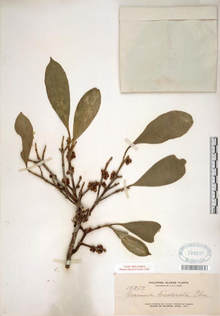 garcinia cambogia rx select nutraceuticals reviews