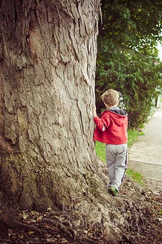 小男孩,大树